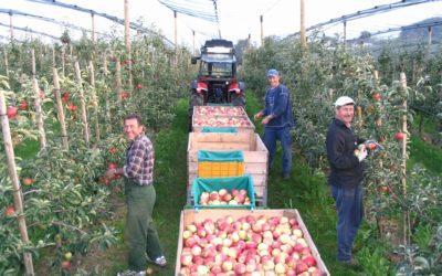 Neue Äpfel